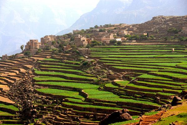 Yemen for Terrace farming